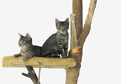 Arbre à chat pour préserver instinct