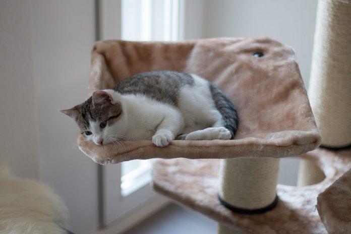 arbre à chat pour le repos