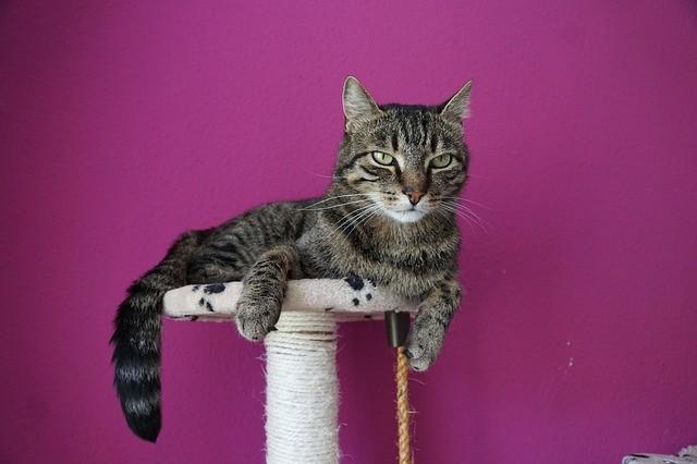 l'arbre à chat important pour les félins