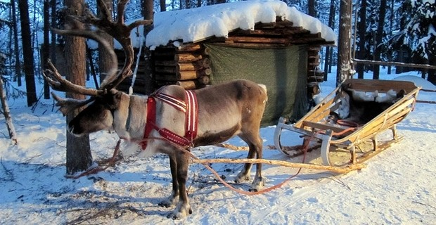 Fêter Noël en Laponie