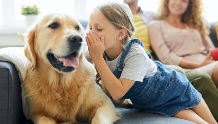 Labrador et un enfant